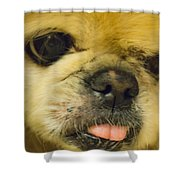 Pensive Pup Shower Curtain