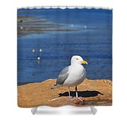 Pensive Seagull Shower Curtain