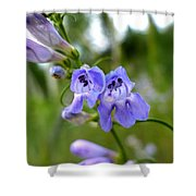 Penstemon 1 Shower Curtain