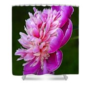 Peonie Debut Shower Curtain