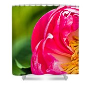 Peonie Flower Shower Curtain