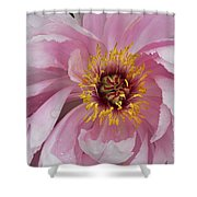 Peonie In Pink Shower Curtain