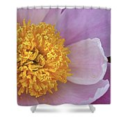 Peonie Yellow Center Shower Curtain
