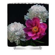 Peonies - Beautiful Flowers - On The Right Is One Of The First Places Among The Garden Perennials Shower Curtain