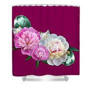 Peonies In Pink And Blue Shower Curtain