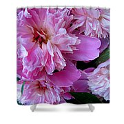 Peonies Under The Weather Shower Curtain