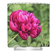 Peony 1162 Textured Shower Curtain