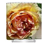 peony 19 Pale Yellow and Pink Tree Peony macro Shower Curtain