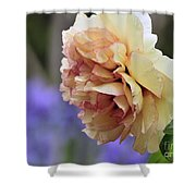 Peony 24 Shower Curtain