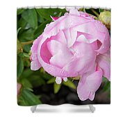 Peony After The Rain Shower Curtain