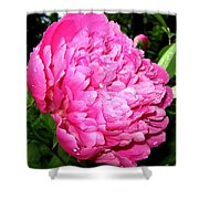 Peony And Raindrops Shower Curtain