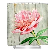 Peony At The Fence Shower Curtain