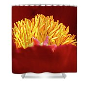 Peony Detail Shower Curtain