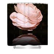 Peony Flower Macro. Shower Curtain