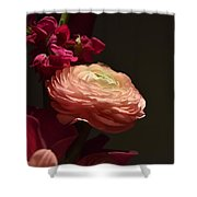 Peony In The Spotlight Shower Curtain