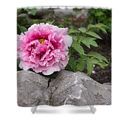 Peony On The Rocks - The Marvels Of Spring Shower Curtain
