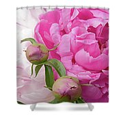 Peony Pair In Pink And White  Shower Curtain