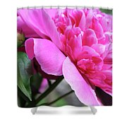 Peony Profile Shower Curtain