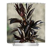 Peony Sprouts Shower Curtain