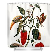 Pepper Plant Shower Curtain