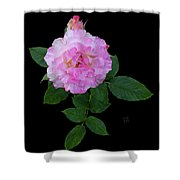 Peppermint Rose1 Cutout Shower Curtain
