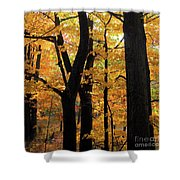 Pequaming Fall Shower Curtain