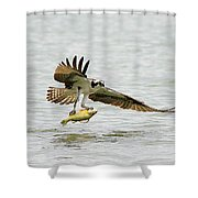 Perch On The Run 2 Shower Curtain