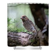Perch Pondering Shower Curtain