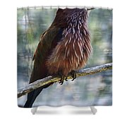 Perched - 1 Shower Curtain