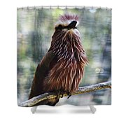 Perched - 2 Shower Curtain