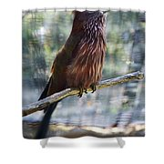Perched - 3  Shower Curtain