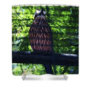 Perched - 4 Shower Curtain