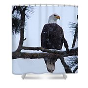 Perched And Proud  Shower Curtain