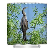 Perched Anhinga Shower Curtain