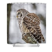 Perched Barred Owl Shower Curtain