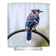 Perched Blue Jay Shower Curtain