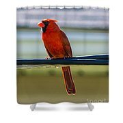 Perched Cardinal Shower Curtain