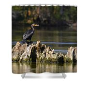 Perched Cormorant Shower Curtain