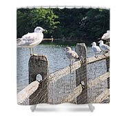 Perched Gulls Shower Curtain