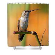 Perched Hummingbird Shower Curtain