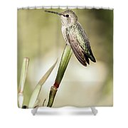 Perched Hummingbird On Flower Shower Curtain