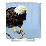 Perched On A Tree Shower Curtain