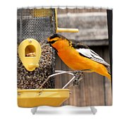 Perched Oriole Shower Curtain