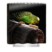 Perched Parakeet Shower Curtain