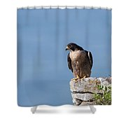 Perched Peregrine Falcon Shower Curtain