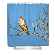 Perched Poser Shower Curtain