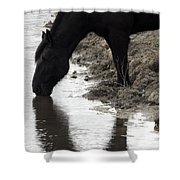 Percheron Kiss Shower Curtain