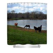 Percheron Pasture Shower Curtain