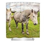 Percherons Horses Shower Curtain