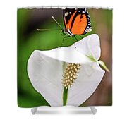 Perching Butterfly Shower Curtain
